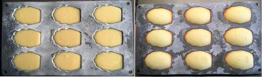 Madeleines tray